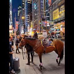 NYPD (whc7294) Tags: nyc horse usa ny newyork manhattan police nypd ricoh hdr photomatix superhearts grd3 platinumheartaward creativemaster ricohgrdigital3 ricohd
