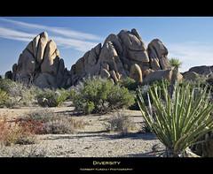 diversity (hirngespinste) Tags: california park blue sky plants usa tree green sand rocks desert joshua national nikond90 afsvrnikkor18200mm13556ged