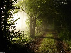 chemin forestier foret d' amondans (francky25) Tags: d foret chemin doubs comté franche forestier amondans