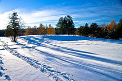 Shadows and Trails (Kurayba) Tags: park trees winter sky canada long edmonton shadows pentax trails footprints william alberta da contrails mayfair k5 hawrelak 18250 smcpda18250mmf3563edalif