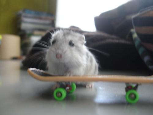 """I like skating!"""