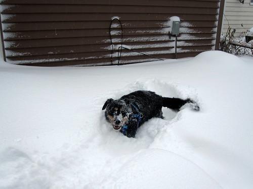 blizzard 083