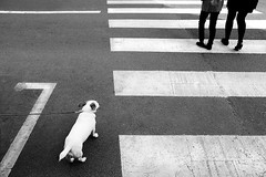 Reluque animale (R e d o x) Tags: bw dog chien paris leg nb ricoh jambe piton grd bdsaintgermain