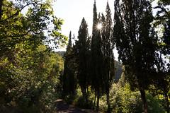 sole fra i cipressi (Mancio85) Tags: natura nature tuscany toscana italia italy sole sun luce light green verde canon 80d cipressi cypresses