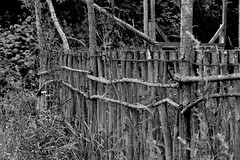 Fence BW (Von Noorden her) Tags: fence black white gate fences zaun zäune natur nature wood holz äste ast branch branches dark kontrast contrast bw blackandwhite blackwhite grey