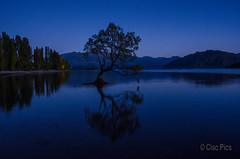 Wanaka Tree (Cisc Pics) Tags: tree wanaka newzealand nature bluehour dawn nikon nikkor 18200 d7000 dx water lake aotearoa reflection southisland morning otago