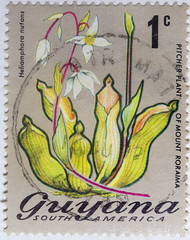 Guyana 1 cent Pitcher Plant