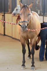 Dallas (Montgomery Area Nontraditional Equestrians (MANE)) Tags: al mane pikeroad