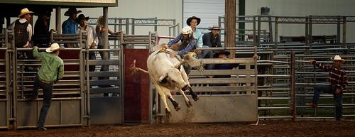 Bull 1 Cowboy 0
