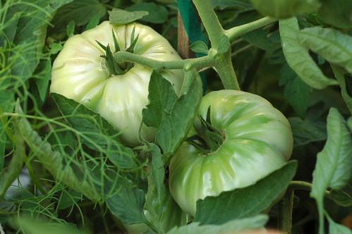 Omars Lebanese Tomatoes