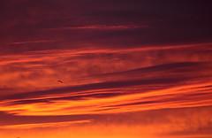 sky over Newport (Martin P Perry) Tags: sunset sky bird canon marine photographer martin dusk seagull events festivals hampshire quay bands newport isleofwight dorset weddings isle perry wight lymington bandphotography isleof martinperry martinperryphotography martinperryphotographer
