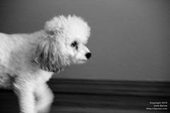 20100712-Speedy pup
