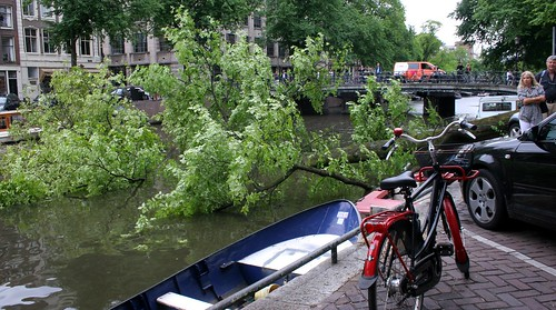 A tree in the Singel Canal
