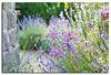 S*U*M*M*E*R (AndreaKamal.com) Tags: pink flowers roses summer nature germany deutschland sommer hamburg violet lavender ourgarden lavendel