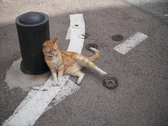 (Gregory Marion) Tags: road cat nice marion gregory ordinary