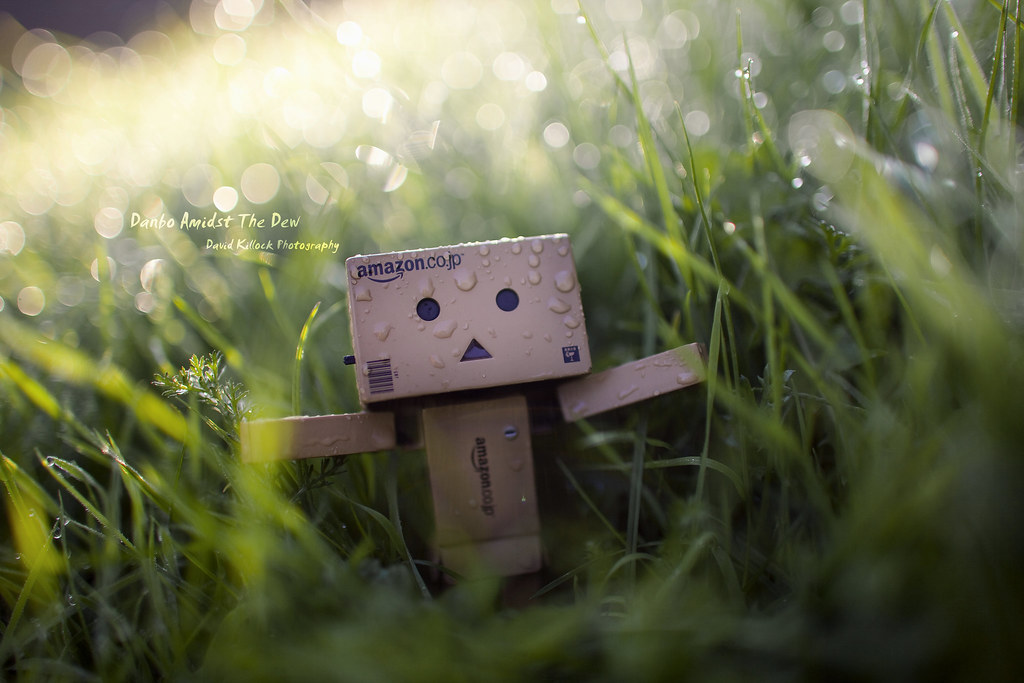 Danbo Amidst The Dew - Wide-Angle Wide Open Wednesday [01/09/2010]