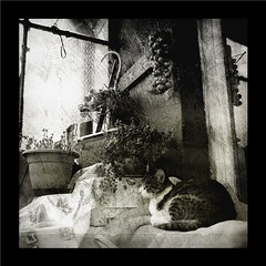 On a Balcony (DomiKetu) Tags: cats cute texture nature animal animals cat lumix chats chat panasonic textures romania gatto gatti textured roumanie ourtime rumanien objectiveart oltenia mywinners dolj gününeniyisithebestofday fz38 photographymypassion panasonicfz38 fz35 boc1110