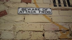 beware of attack frog
