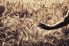 (DeLaRam.) Tags: girl hand wheat ring gladiator