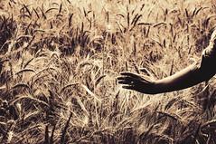 (DeLaRam.) Tags: girl hand wheat ring gladiator