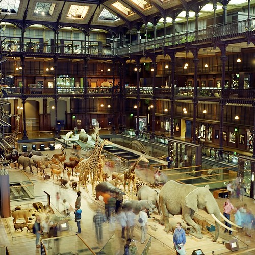 The Paris Museum of Natural History