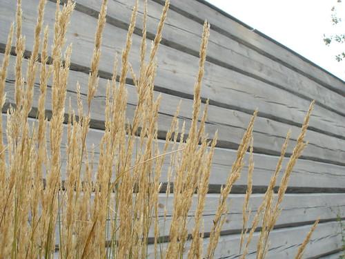 Gräs mot vägg