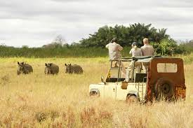 Tanzanian Safari by Sommer Dinning and Ray Dinning