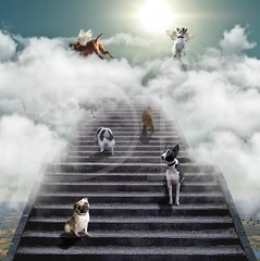 ~ All Dogs Go To Heaven ~ (Denise Purrington {{say hello to my Little Bears:)) Tags: sky sun texture dogs sunshine clouds stairs wings puppies heaven treasure artistic chest steps angels layers lepetitprince imagesforthelittleprince magicunicornverybest magicunicornmasterpiece magiayfotografia truthandillusion stonedigitalexperienceagency