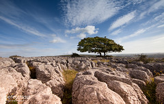 The Lime Tree (PeterChad) Tags: getty