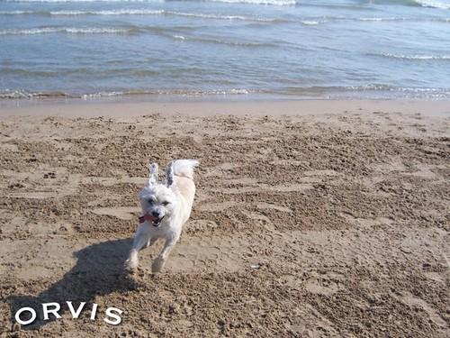 Orvis Cover Dog Contest - Ernie
