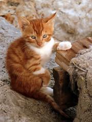 mdr :) (Sinan Saldran) Tags: cat sweet kedi kartpostal