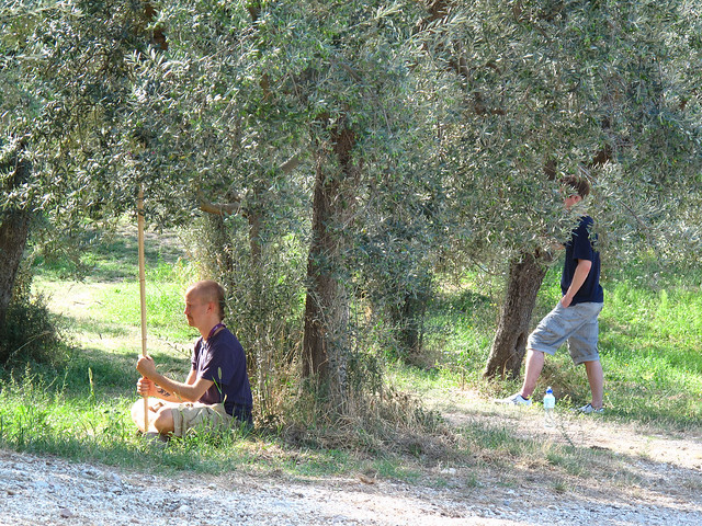 Frode and Kristian taking a break by the olive trees