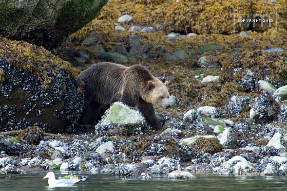 Grizzly Bear Lodge & Safari Trip