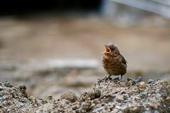 #288/365 - Baby Bird