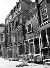 amsterdam, schippersstraat (andrevanb) Tags: dog amsterdam hond schipperstraat lastagebuurt