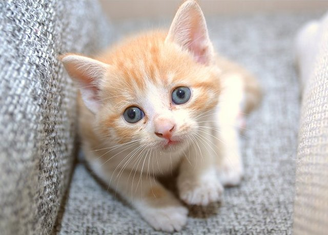 cute rescued kitten