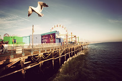 Los Angeles - The bird and the pier (manlio_k) Tags: ocean sea bird amusement pier losangeles santamonica wide vignetting