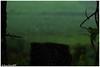 Patterns (Naseer Ommer) Tags: india canon droplets web spiderweb kerala vagamon naseerommer canon5dmarkii discoverplanetinternational