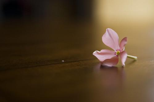 フリー写真素材, 花・植物,