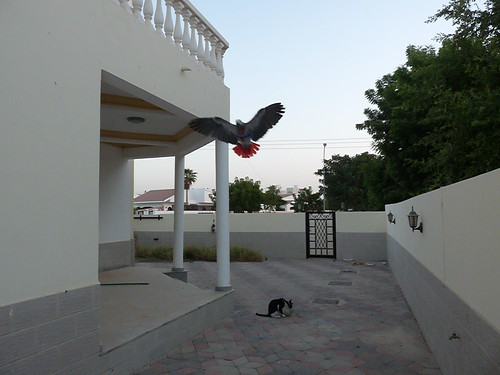 P1320706