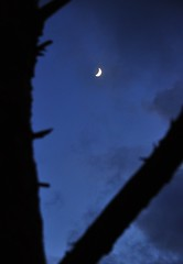 ...crescent (Rosanna Leung) Tags: sky moon silhouette night crescent trunk