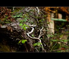 Tronco cado (Jaime GF) Tags: naturaleza arbol nikon asturias luanco tronco gozn d40 aramar