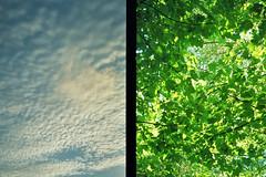 overhead (themanfromicon) Tags: trees sunlight green 35mm woodland brighton halfframe olympuspen eastsussex stanmer olympuspenee penee stanmerpark