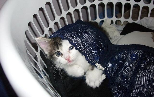 cat adoption fairfax va