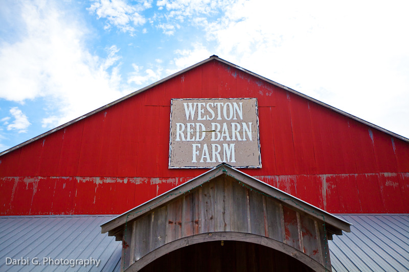 DarbiGPhotography-Weston Red Barn Farm-101