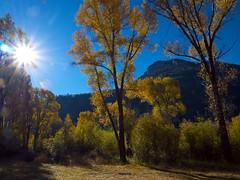 Autumn Foliage, McIntyre Peak (Michael C. Rael) Tags: autumn trees sun landscape colorado sanluisvalley mcintyrepeak