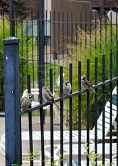Photo: Birds on a rail