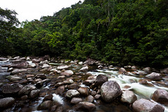 Daintree National Park (Lazzaro75) Tags: trip travel holiday tree nature water alberi forest canon river nationalpark rainforest rocks honeymoon fiume australia natura queensland cairns rocce acqua viaggio vacanza foresta lunadimiele parconazionale lazzaro forestapluviale daintreenationalpark flickrestrellas federicomicheli eos5dmkii