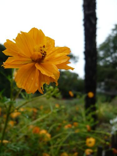 花を綺麗に撮るのって難しいなあ