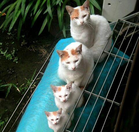 果然是一家人